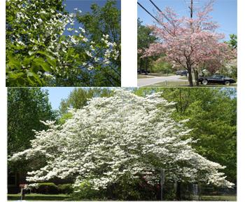 2008.4.18木たち(花)