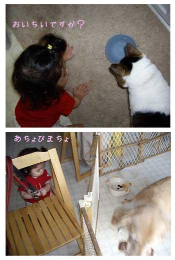 2008.6.4 三姉妹