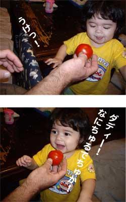 2008.7.7 トマト初挑戦&収穫1