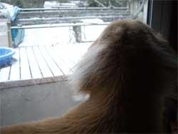 20090120初雪1