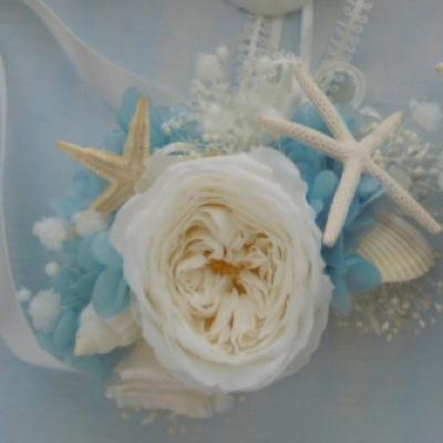 貝殻 ホワイト&ブルー リストレット