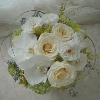 結婚祝い 胡蝶蘭