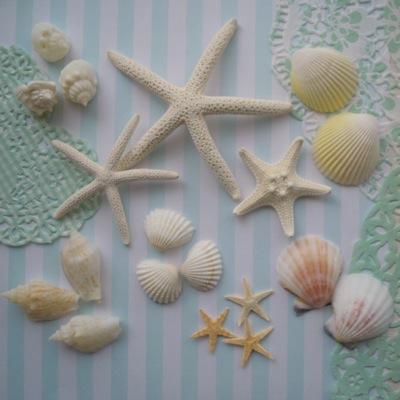 スターフィッシュ&貝殻の髪飾り