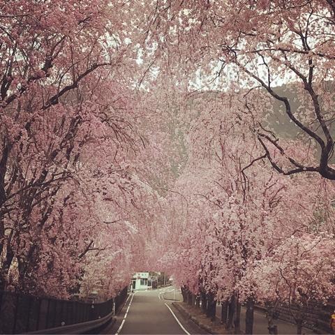 「駿河徳山 桜」の画像検索結果