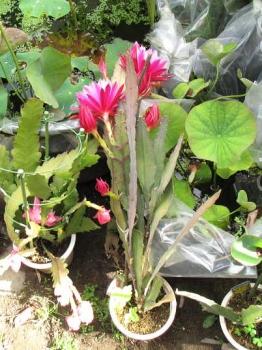 今年の開花