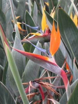 オレンジプリンス花の様子