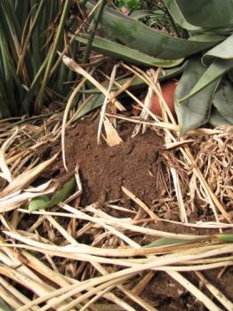 肥料の様子