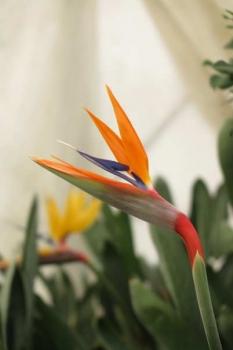 花の様子1
