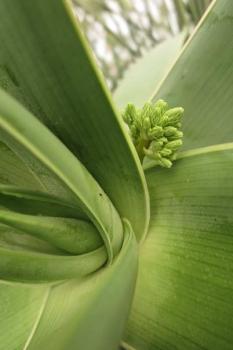 花芽の様子1
