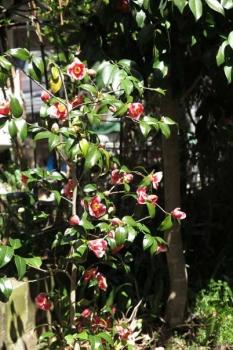 開花の様子