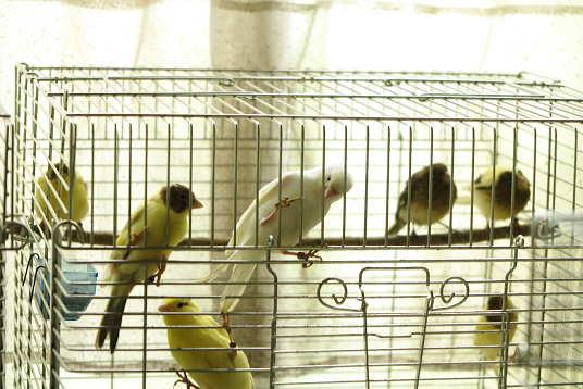若鳥の様子2