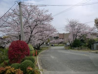 万田小学校6