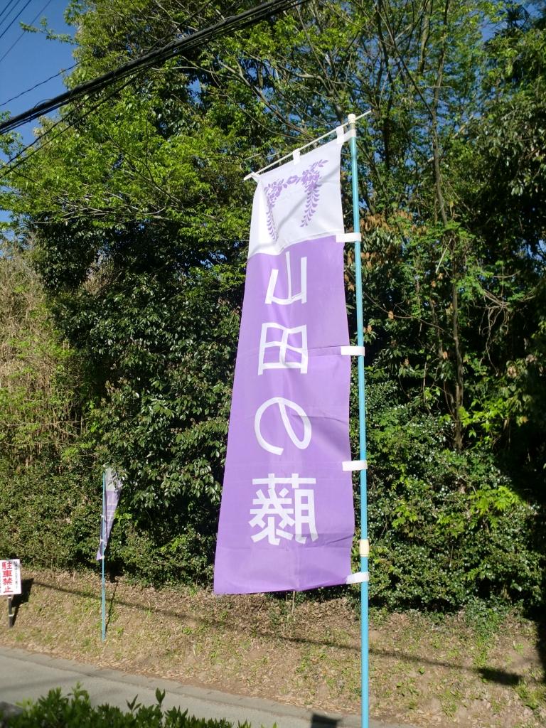 山田の藤3