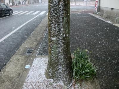 立春 大雪2
