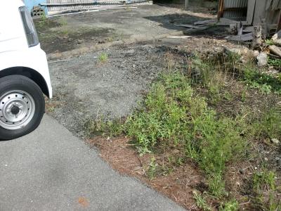 除草剤の散布3