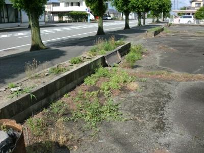 除草剤の散布4