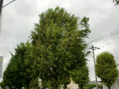 台風25号6