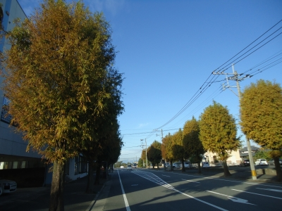 街路樹紅葉3