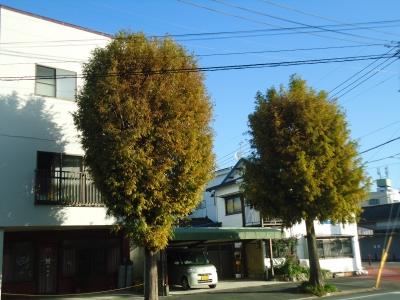 街路樹紅葉4