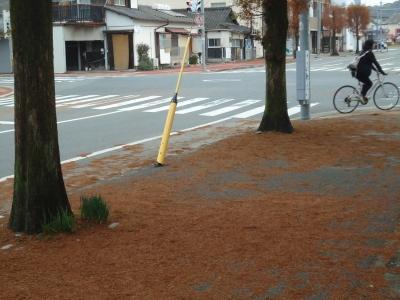 街路樹の落ち葉1