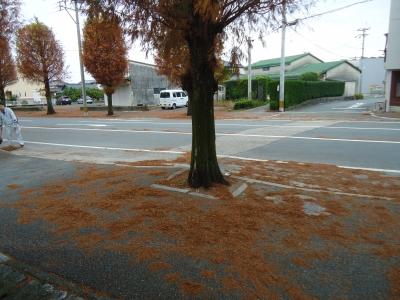街路樹の落ち葉2