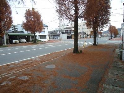 街路樹の落ち葉3