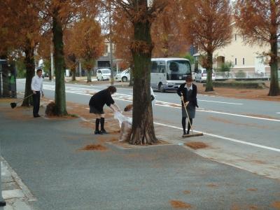 街路樹の落ち葉4