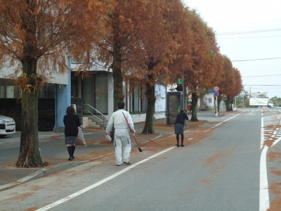 街路樹の落ち葉5