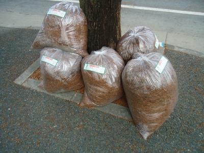 街路樹の落ち葉6