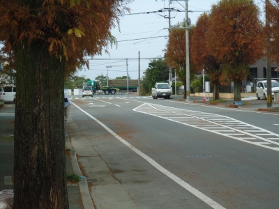 街路樹の落ち葉9