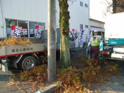 街路樹の剪定2