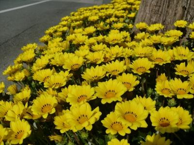 黄色い花5