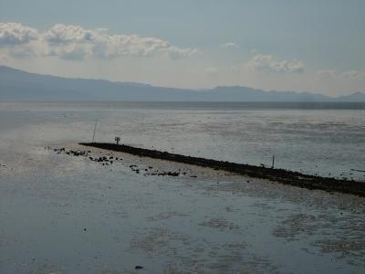 有明海の干潟6