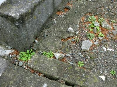 春節 除草剤散布2