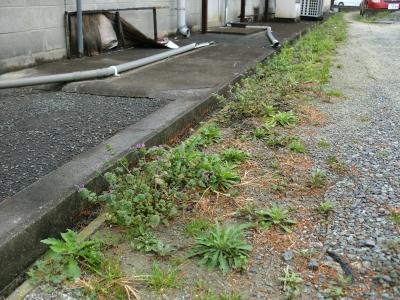 春節 除草剤散布3