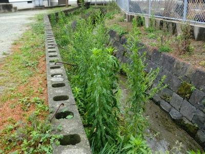 春節 除草剤散布4