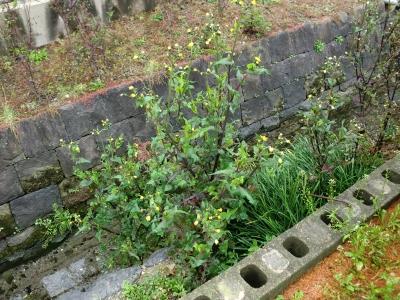 春節 除草剤散布5