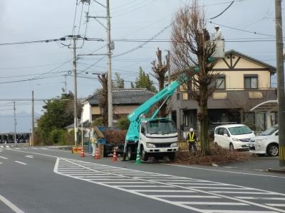 街路樹の剪定1