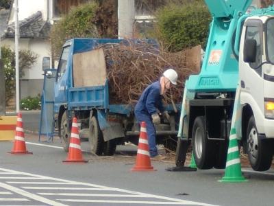 街路樹の剪定3