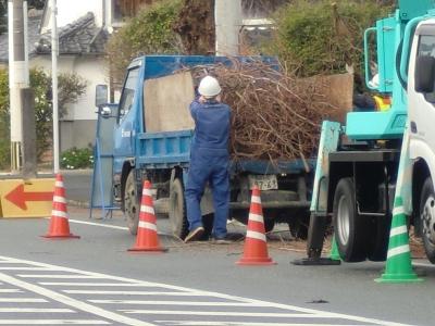 街路樹の剪定4