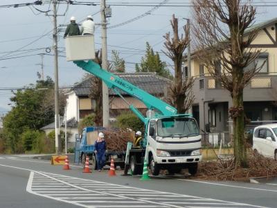 街路樹の剪定5