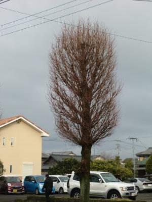 街路樹の剪定6