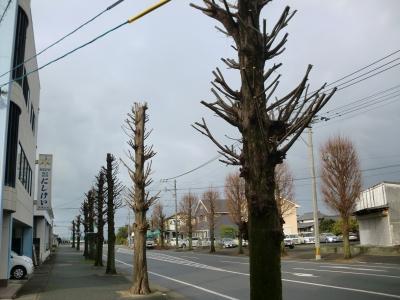 街路樹の剪定8