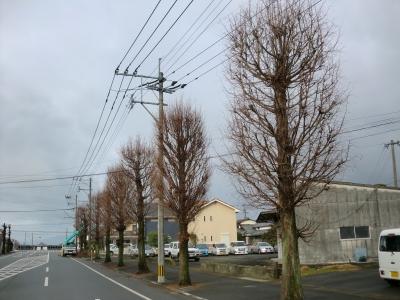 街路樹の剪定9