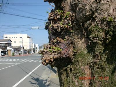 木の芽吹き1