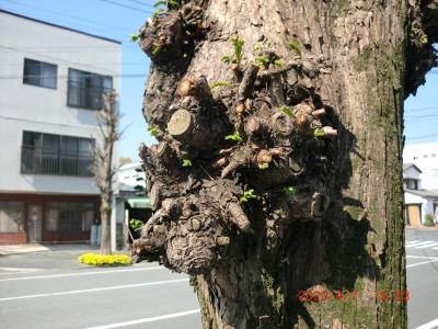 木の芽吹き2
