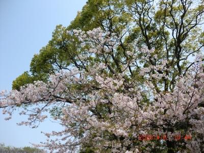 熊野神社9