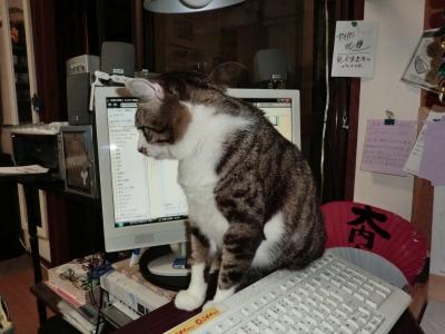 パソコンのそばに来たよ