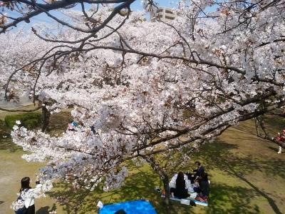 徳島公園の桜