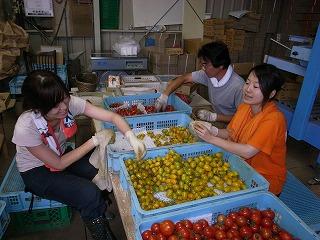 高見澤さんトマト